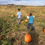 Pumpkin Picking at Lynd's Farms!