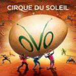 OVO Cirque Du Soleil in Columbus!