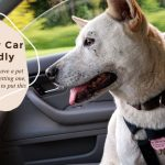 Making your car Pet-Friendly