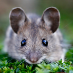 Everything You Ever Wanted to Know About Dealing with Mice