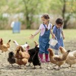 What You Need to Start Raising Chickens