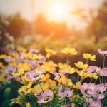 5 Summer Updates To Improve Your Home
