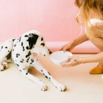 4 Feeding Tips For The Family Dog