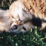 What To Do If Your Kids Are Desperate For A Pet